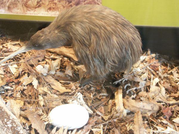 Kiwi Neuseeland by ReiseTravel.eu